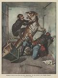 Domatore in lotta con una tigre non ancora addimesticata, che viene salvato da una scimmia scimpanze
