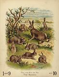 Ten Rabbits