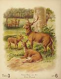 Six Deer