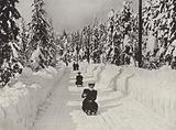 Winter Sport near Kristiania