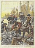 La Cessazione Della Miseria in Bretagna, La Miracolosa Pesca Di Sardine Avvenuta Nei Giorni Andati