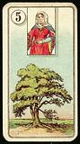 Tree, at a distance of the personal card, is a sign of good health
