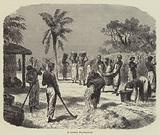 A Cotton Plantation
