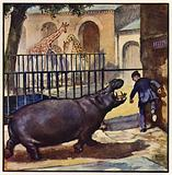He ran for his life, with the hippo roaring at his heels