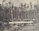 Childer's Sawmill, Gippsland