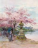 Cherry Blossom and Stone Lantern, Ueno Park