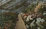 Chrysanthemum House, Kew Gardens
