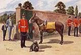 The Pet Mule and Monkey of the Middlesex Regiment