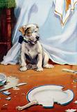 Dog with broken plate