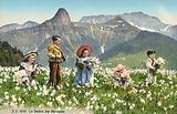 Daffodil season in Switzerland