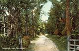 Tennyson's Lane, Haslemere