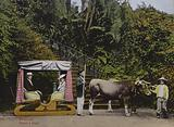 Madeira, Bullock car