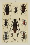 Plate from The Young Beetle-Collector's Handbook