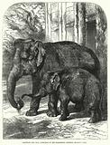 Elephant and Calf, formerly in the Zoological Gardens, Regent's Park