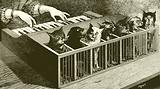 The piano of cats
