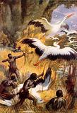 The battle of the pygmies and the storks