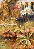 A group of carnivorous plants