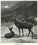 A Herd of Elk