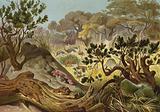 Termitenhugel in Sennar