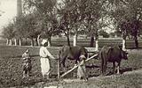 Egyptian Types and Scenes, Ploughing at Heliopolis