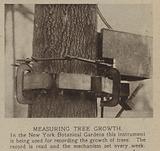 Measuring tree growth