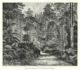 Australia: A Road through an Australian Forest