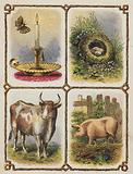 Moth, Nest, Ox, Pig