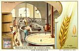 Making beer from barley in a brewery