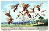 Mating flight of ants