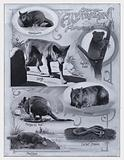 Some Australian Animals