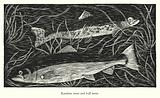Rainbow trout and bull trout
