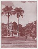 Fiji: In the Botanical Gardens, Suva