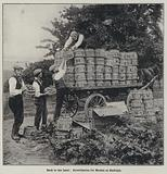 Loading strawberries for market onto a horse-drawn cart at Hadleigh, Essex
