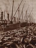 Great Yarmouth fishing fleet