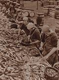 Women in Great Yarmouth splitting and cleaning herring