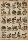 A to Z of animals