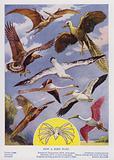 How a bird flies