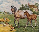 Horse and foal, sheep and hens