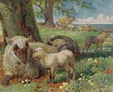 Sheep and lambs in a pasture in spring