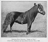 Shetland Pony Stallion, Laird of Noss, First Prize, Highland and Agricultural Society's Show, 1892