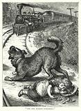 """The dog barked furiously"""