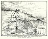 Fishing for smelts in the surf, Washington State