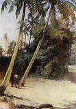 Solomon Island Boy climbing after green cocoa-nuts, near Gavutu, New Florida