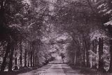 The Lime Tree Avenue, Mount Stuart