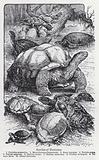 Species of tortoises