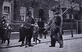 Dancing bear on a suburban street, London, 1900s