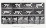 Eadweard Muybridge: The Gallop
