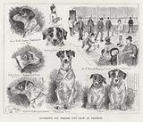 Southdown Fox Terrier Club Show at Brighton