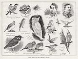 Bird Show at the Crystal Palace