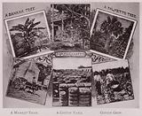 A Banana Tree; Pomegranates; A Palmetto Tree; A Market Team; A Cotton Yard; Cotton Crop